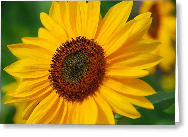 Sunflower Greeting Card by Michele Wright