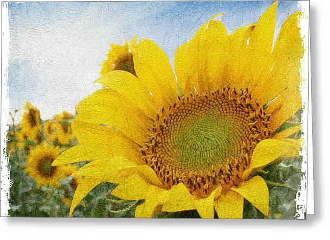 Sunflower Morning Greeting Card
