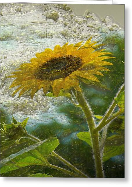 Sunflower Mountain Greeting Card