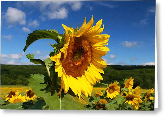 Sunflower Nirvana 22 Greeting Card by Allen Beatty