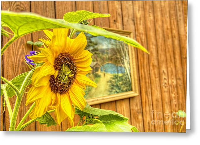 Sunflower On A Fence Greeting Card by Jim Lepard