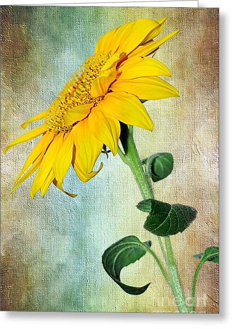 Sunflower On Textured Canvas Greeting Card by Kaye Menner