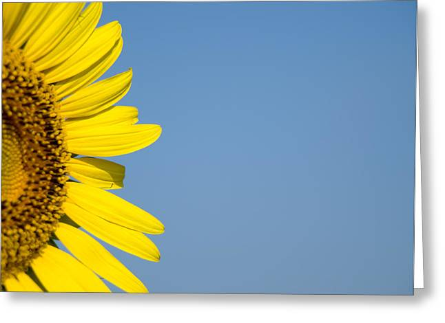 Sunflower Greeting Card by Paige Sims