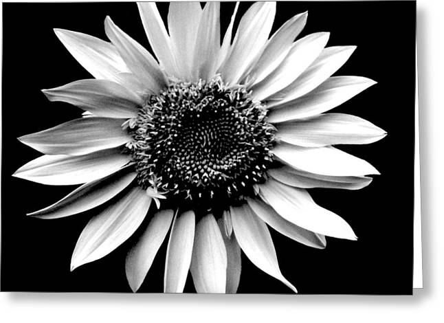 'sunflower Portrait' Greeting Card