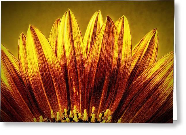 Sunflower Greeting Card by Richard Allen