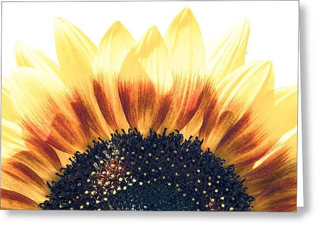 Sunflower Rising Greeting Card by Wade Brooks
