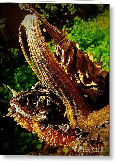 Greeting Card featuring the photograph Sunflower Seedless 2 by James Aiken