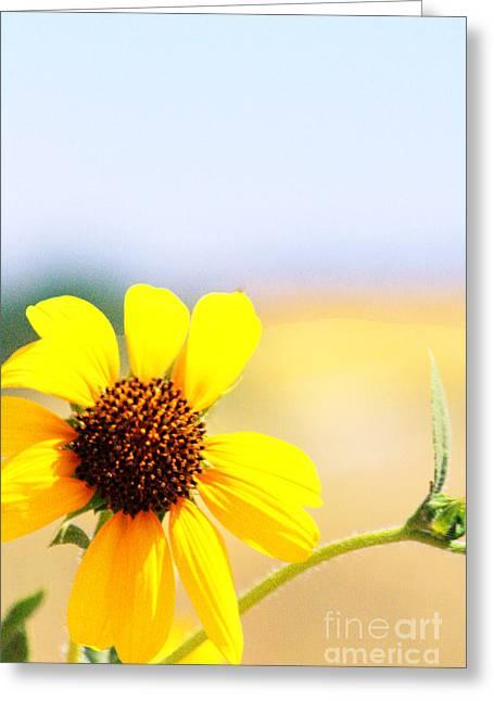 Sunflower Series Part I Greeting Card by ChelsyLotze International Studio