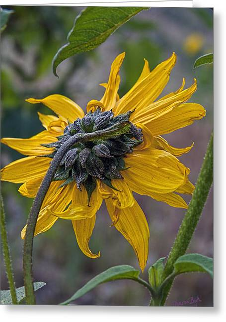 Sunflower Greeting Card by Sharon Beth