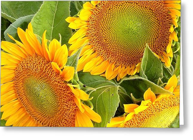 Sunflower Smiles Greeting Card by Kim Bemis
