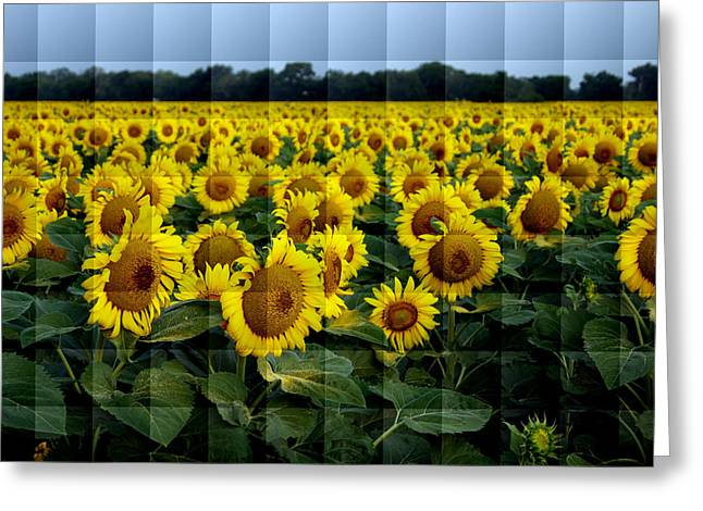 Sunflower Squared Greeting Card