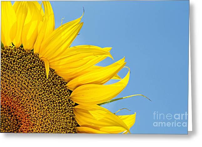 Sunflower Greeting Card by Stela Taneva