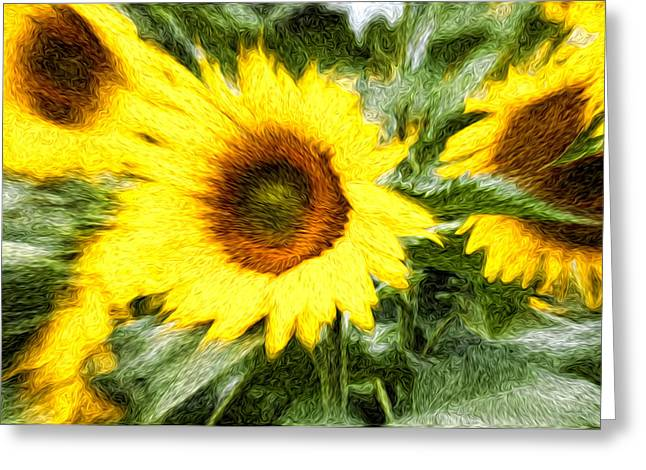 Sunflower Study 3 Greeting Card by Mitchell Brown