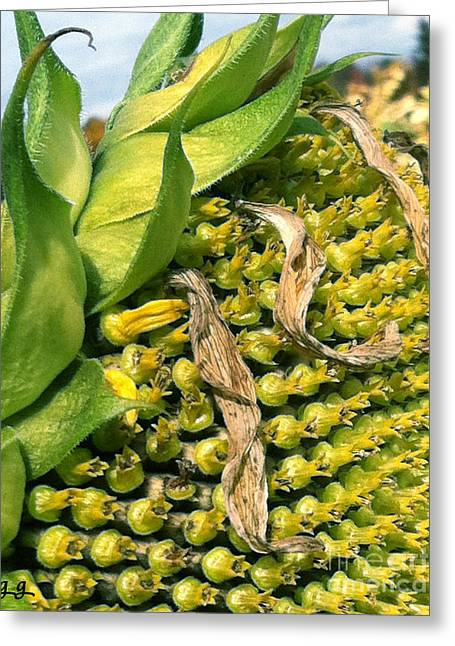Greeting Card featuring the photograph Sunflower Study by Geri Glavis