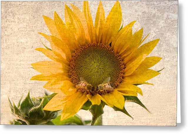 Sunflower - Sun Kiss Greeting Card