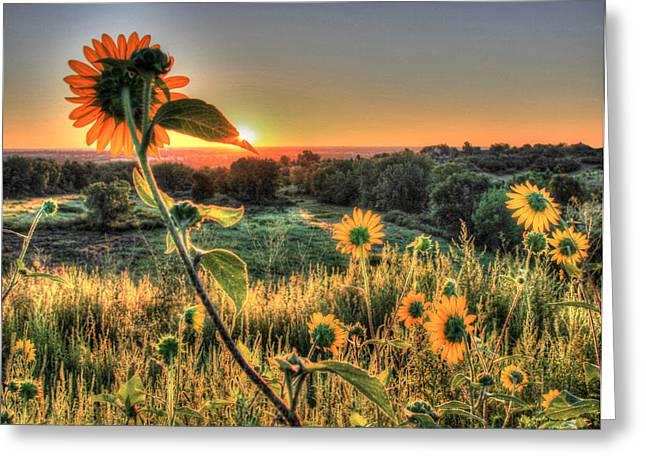 Sunflower Sunrise 1 Greeting Card by Diane Alexander