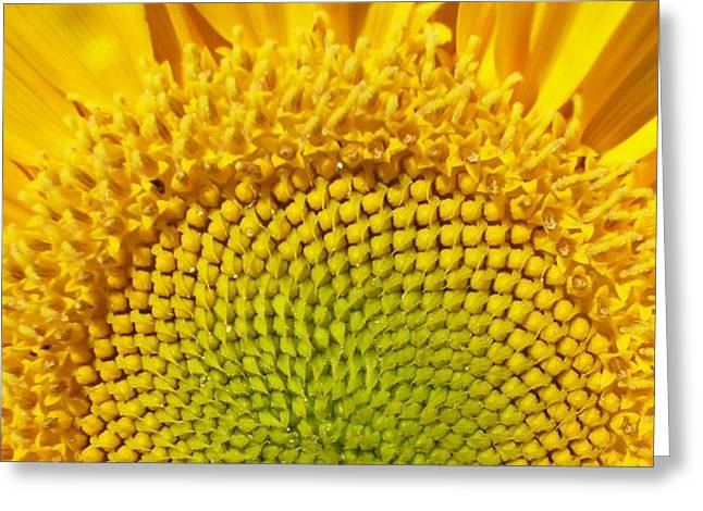 Greeting Card featuring the photograph Sunflower Sunrise by Michael Dohnalek