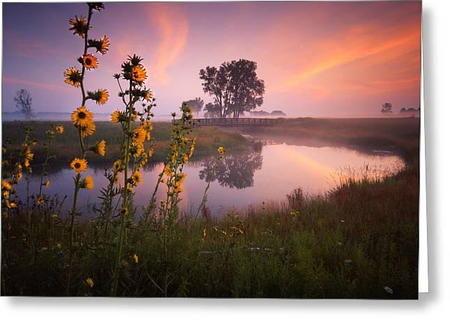 Sunflower Sunrise Greeting Card