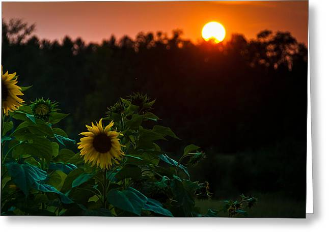 Greeting Card featuring the photograph Sunflower Sunset by Cheryl Baxter