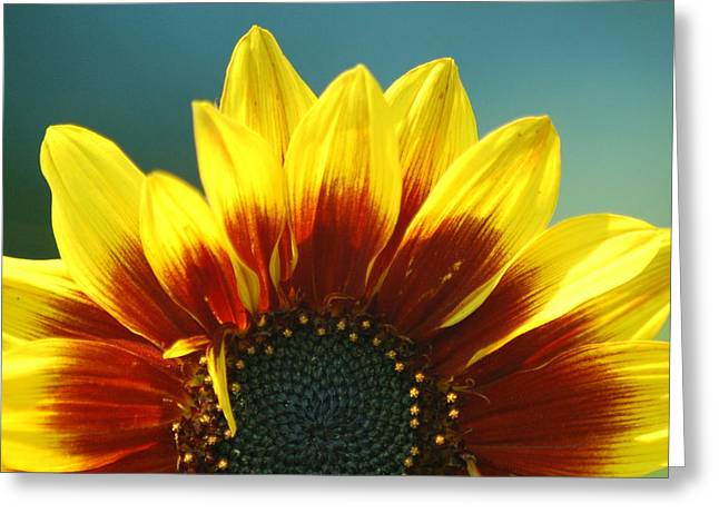 Greeting Card featuring the photograph Sunflower by Tam Ryan