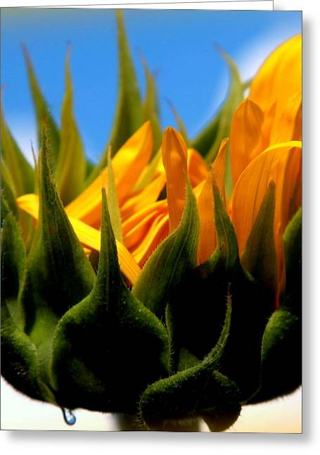 Sunflower Teardrop Greeting Card by Karen Wiles
