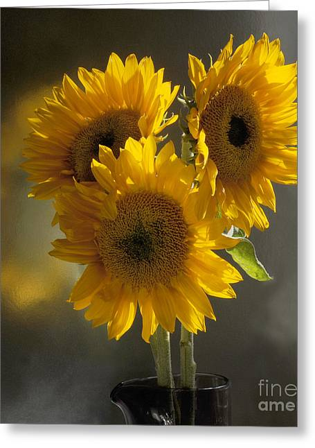 Sunflower Trio Greeting Card by Addie Hocynec