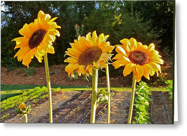 Sunflower Trio Greeting Card
