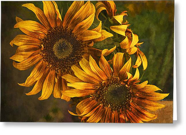 Sunflower Trio Greeting Card by Priscilla Burgers