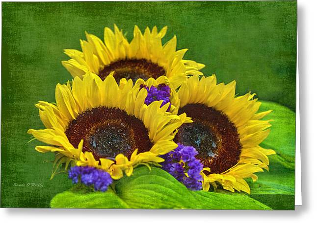 Sunflower Trio Greeting Card by Sandi OReilly
