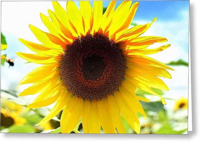 Sunflower Greeting Card by Ursula Coccomo