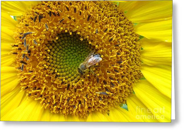 Sunflower Visitor Series 2 Greeting Card