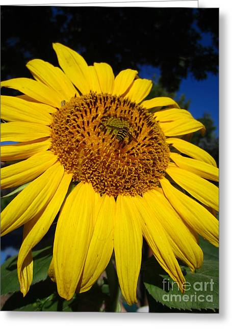 Sunflower Visitor Series 3 Greeting Card