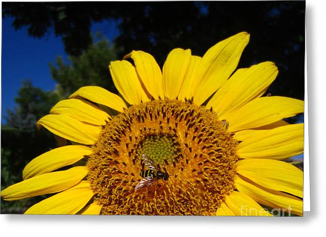 Sunflower Visitor Series 4 Greeting Card