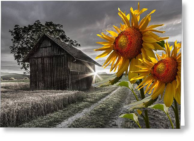 Greeting Card featuring the photograph Sunflower Watch by Debra and Dave Vanderlaan