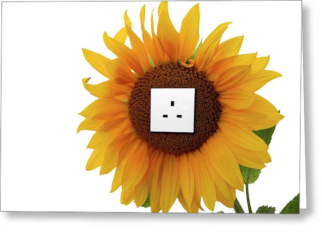 Sunflower With An Electrical Socket Greeting Card by Victor De Schwanberg