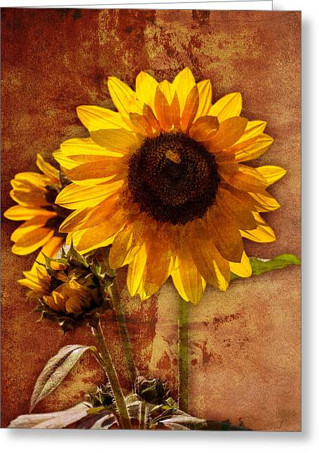 Greeting Card featuring the photograph Sunflower With Bee Number Two  by Bob Coates