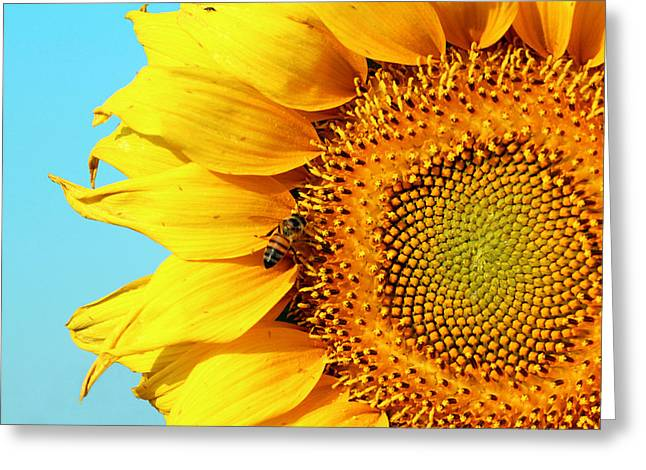 Sunflower With Bee - Photo Greeting Card