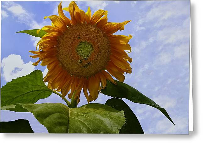 Sunflower With Busy Bees Greeting Card by Chris Flees
