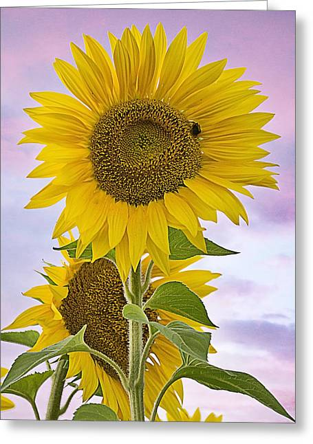 Sunflower With Colorful Evening Sky Greeting Card