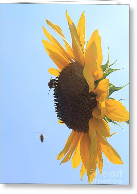Sunflower With Visitors Greeting Card