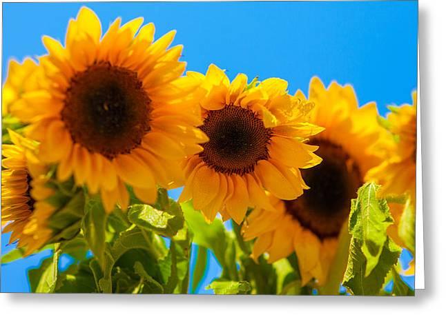 Sunflowers 3 Greeting Card by Dasmin Niriella
