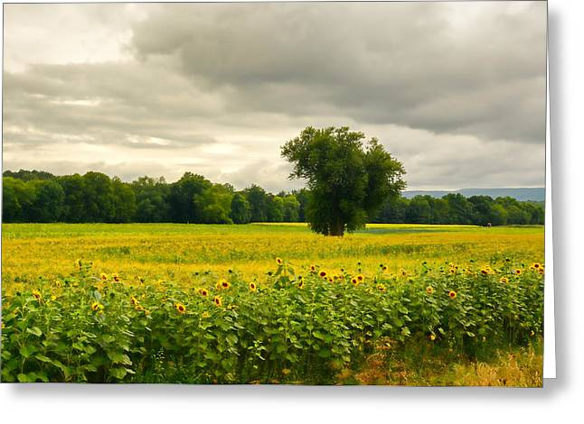 Sunflowers And The Tree Greeting Card