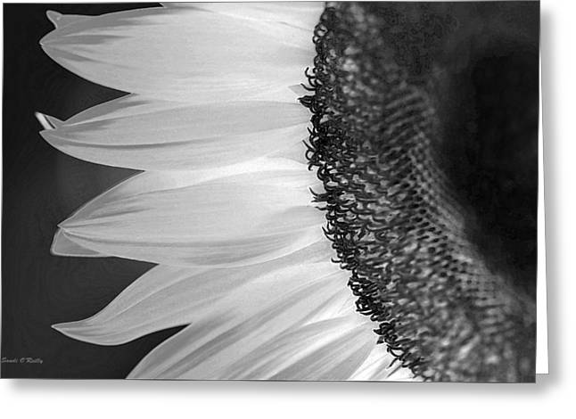 Sunflowers Beauty Black And White Greeting Card by Sandi OReilly