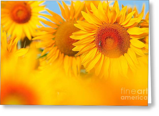 Sunflowers Greeting Card by Boon Mee