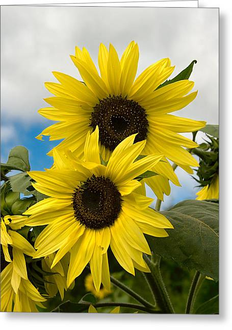 Greeting Card featuring the photograph Sunflowers by Chuck De La Rosa