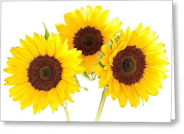Sunflowers Greeting Card by Claudio Bacinello