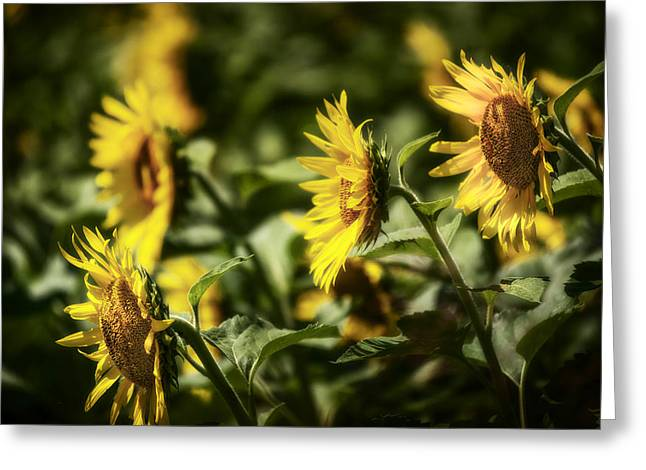 Greeting Card featuring the photograph Sunflowers In The Wind by Steven Sparks