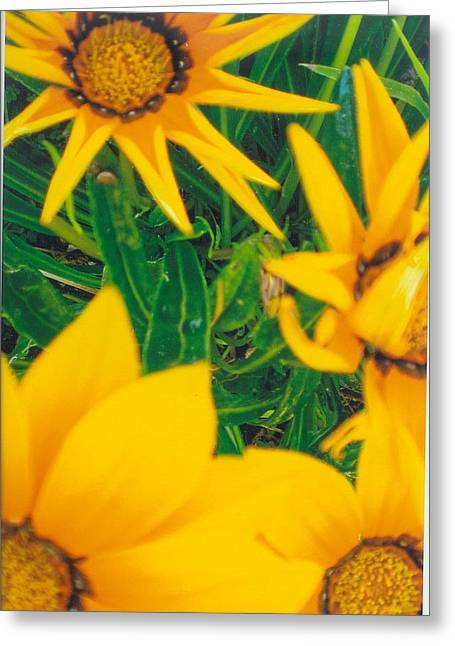 Sunflowers Medley Greeting Card