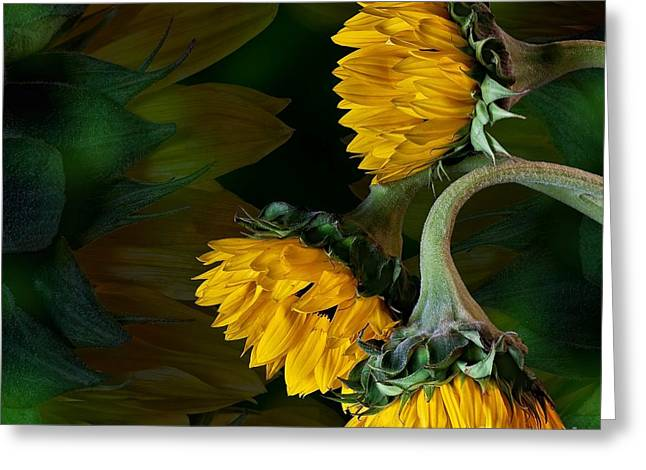 Greeting Card featuring the photograph Sunflowers by Shirley Mangini