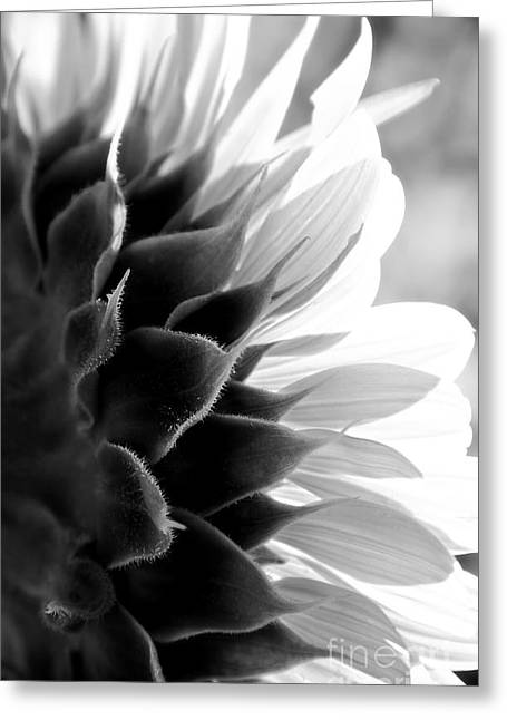 Sunkissed In Black And White Greeting Card by Lee Craig